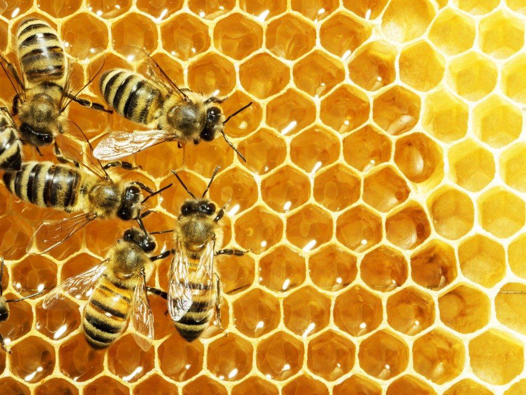 Bees woking, adding honey in honeycombs