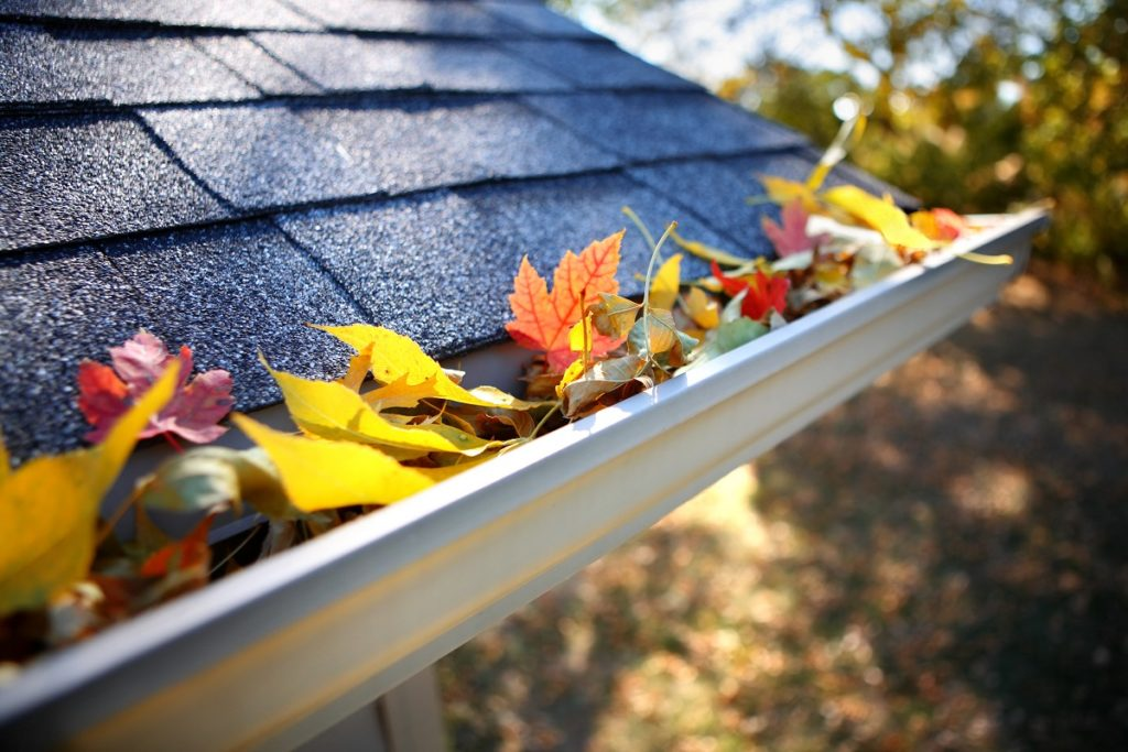 roof gutter with autumn leaves
